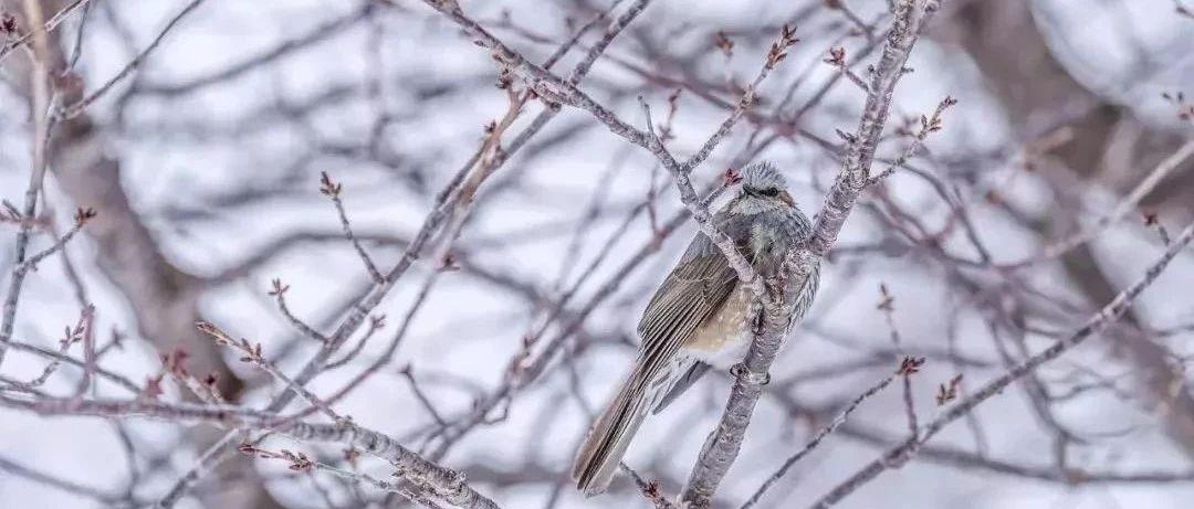 今日大雪丨风起雪落知寒意,唯有归家暖人心!